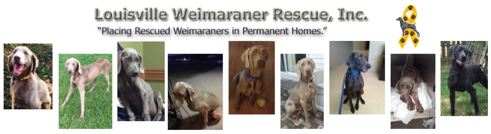 Louisville Weimaraner Rescue Inc.